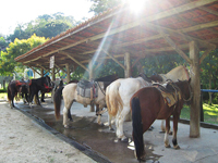 cavalos-e-charretes