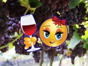 Excursão São Roque-SP - Estrada do Vinho