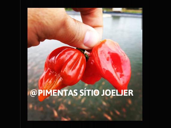 Sitio_Joeljer_31